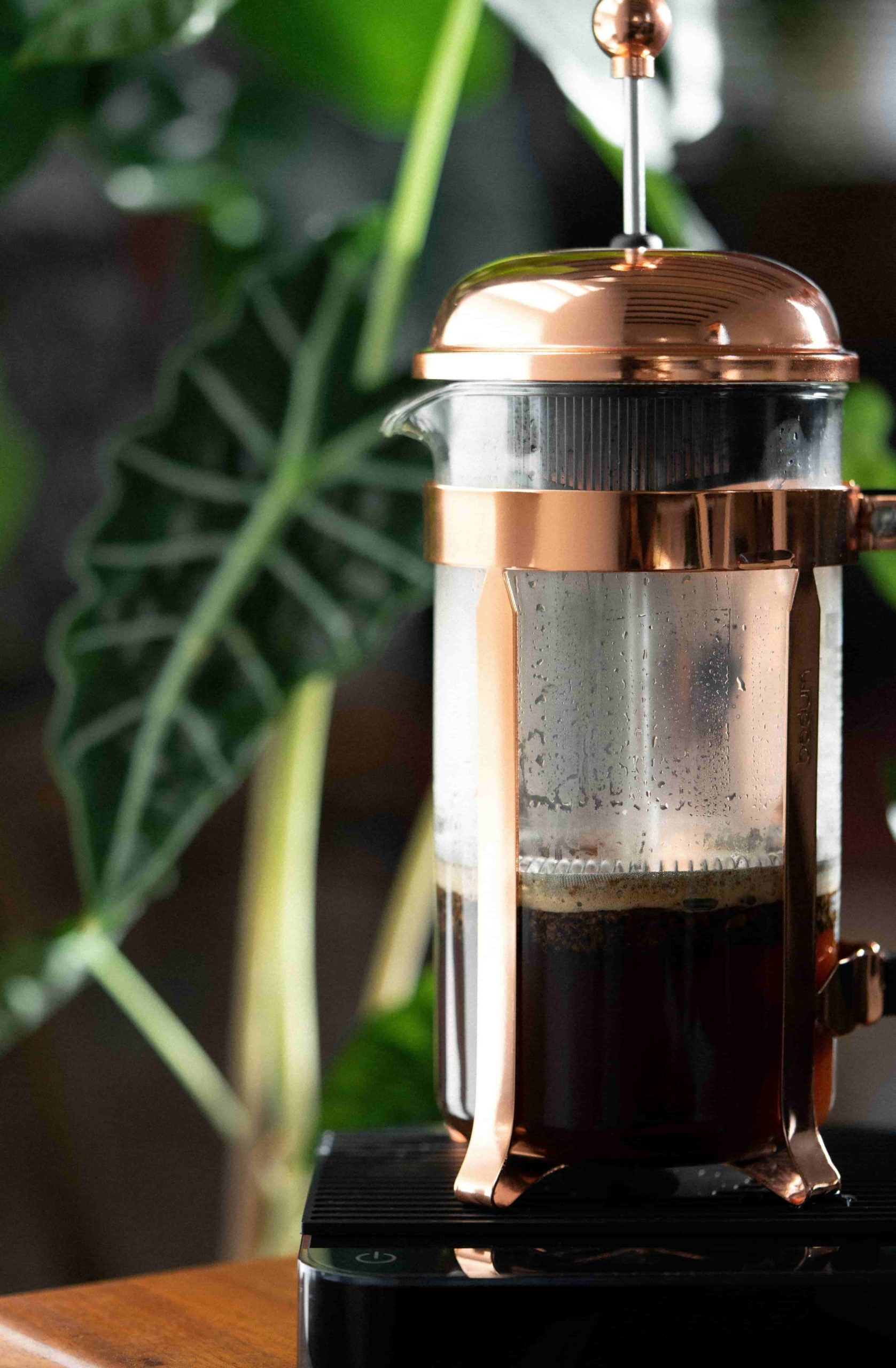 Classic Bodum Glass and Copper French Press with brewed coffee inside atop an Acaia scale with indoor plants background