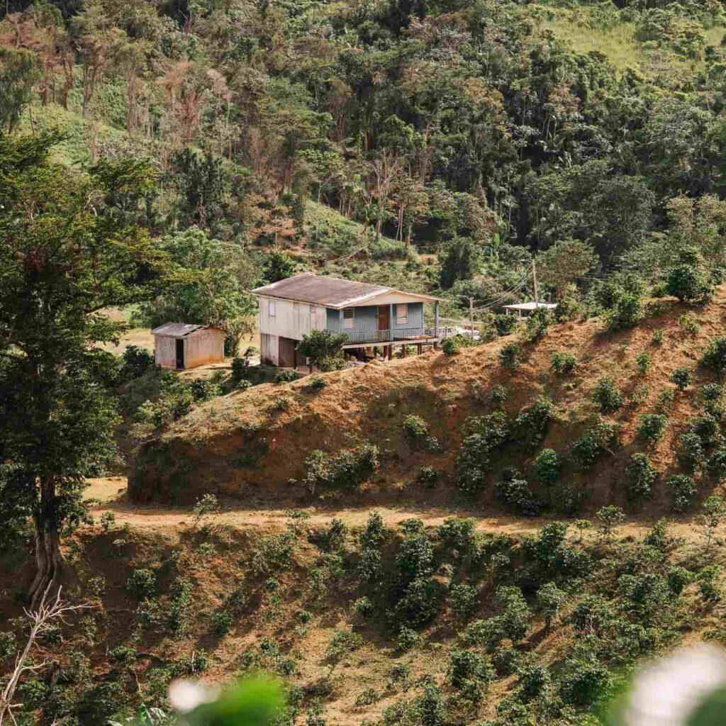 Gustos Coffee From Puerto Rico, Finca La Montaña, Yauco, PR